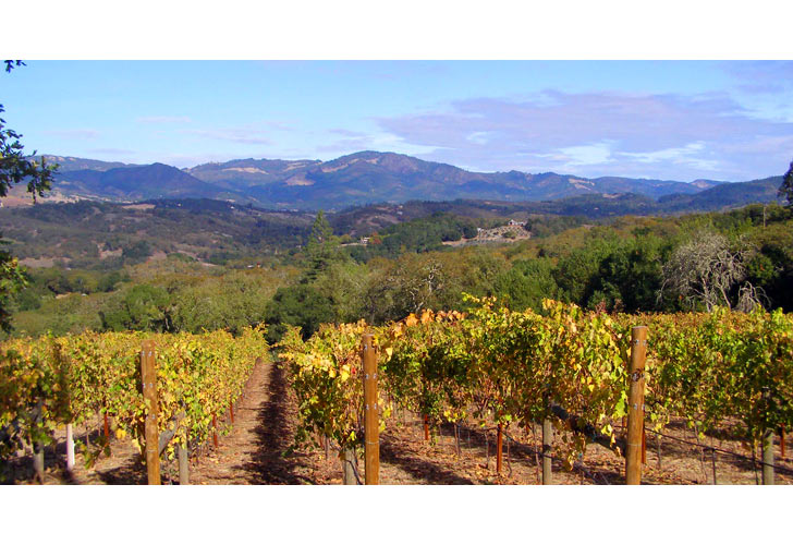 Take a Taste of Napa Wine Country