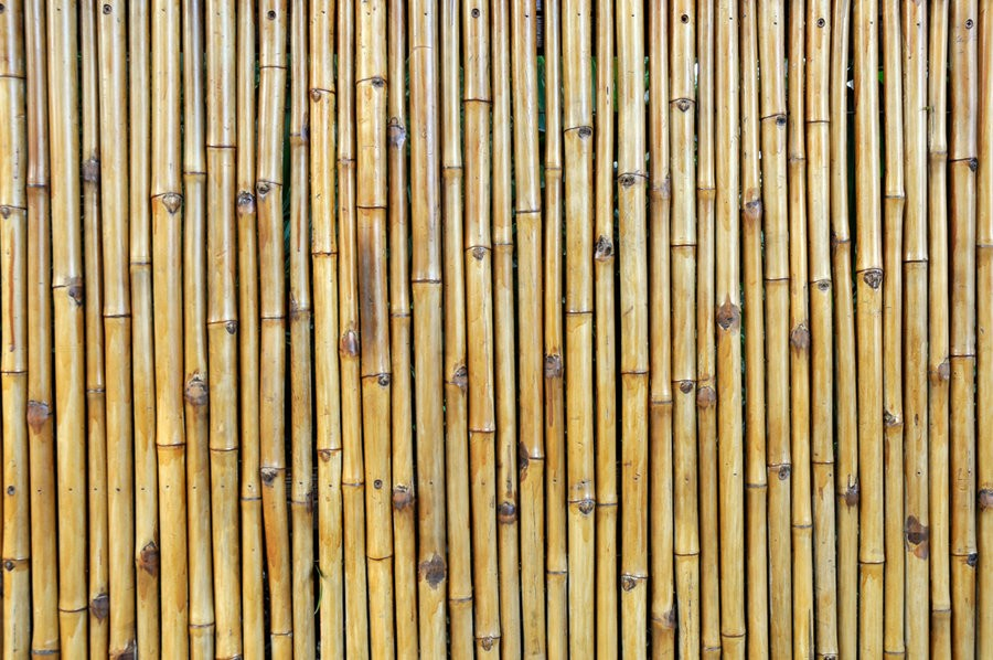 Backyard Fung Shui with a Bamboo Fence