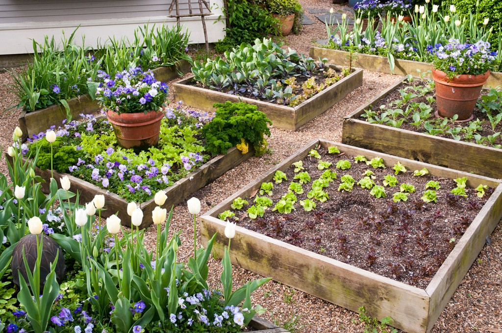 Beautify Your Garden With Raised Garden Beds