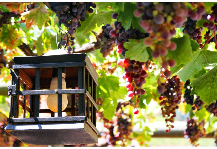 Napa Valley Wine Region California