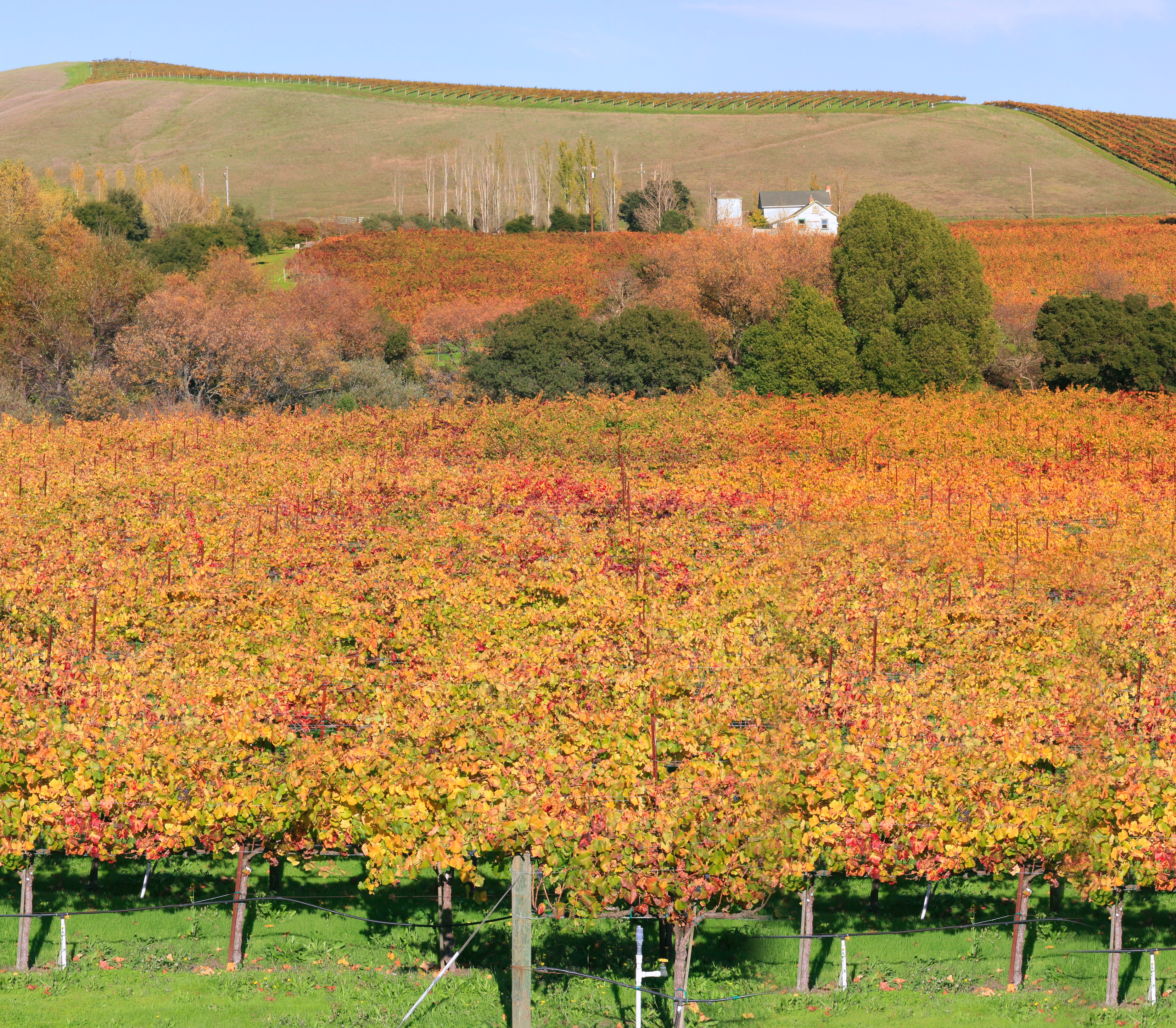 New Photo Of The Best Napa Valley Vineyard You Should Visit