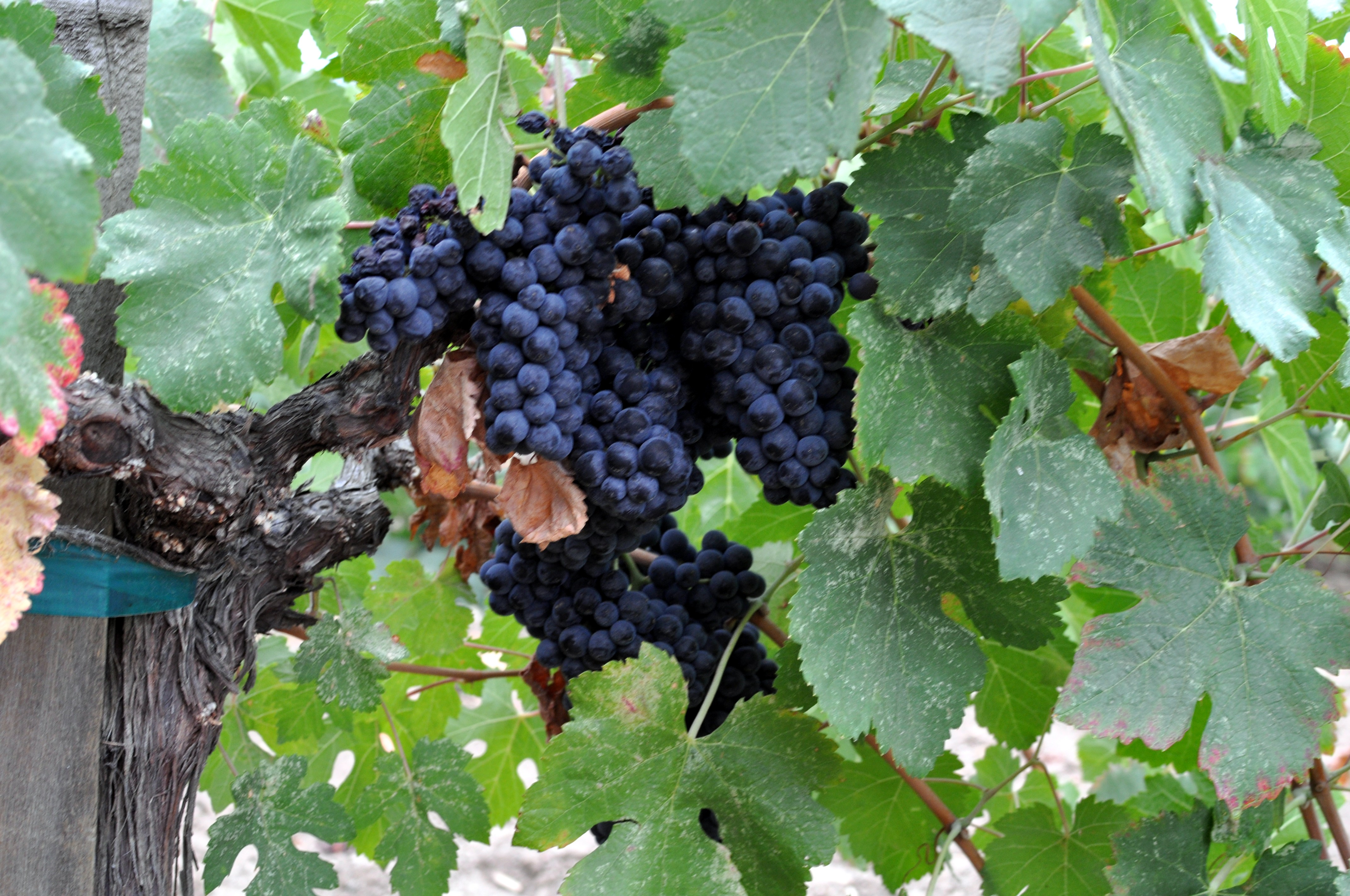 Best Napa Valley Vineyards To Visit