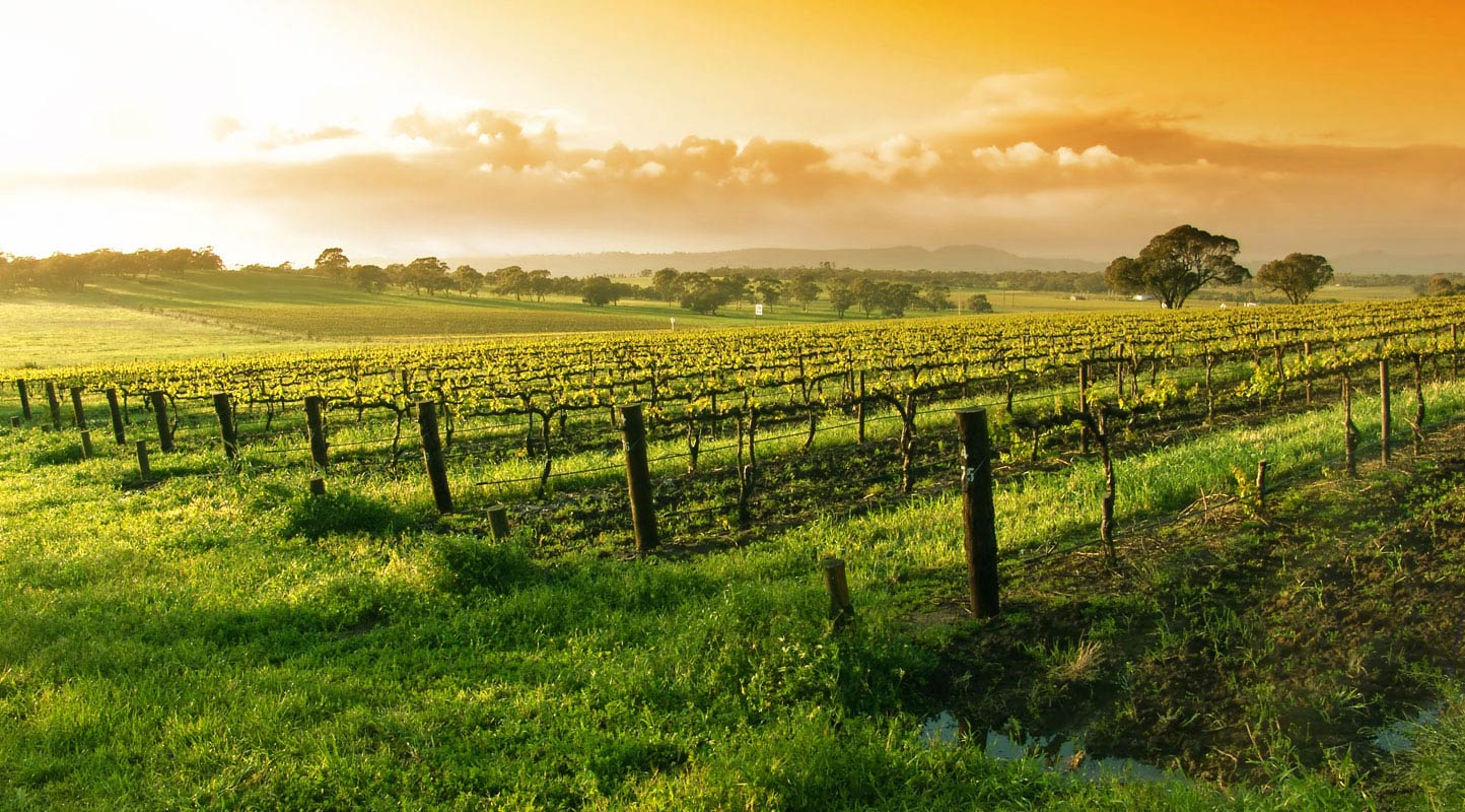 Best Napa Valley Vineyards