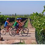 Napa Wine Country Bike Tours