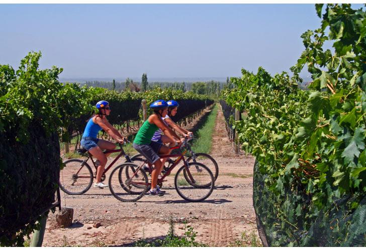 Napa Wine Country Bike Tours