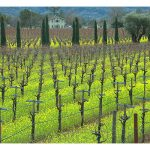 pictures of napa wine country