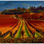 Napa Valley Wine Country California