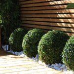 Cheap Garden Designs Ideas