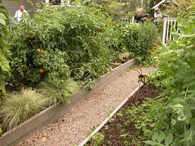 Cheap small vegetable garden plan