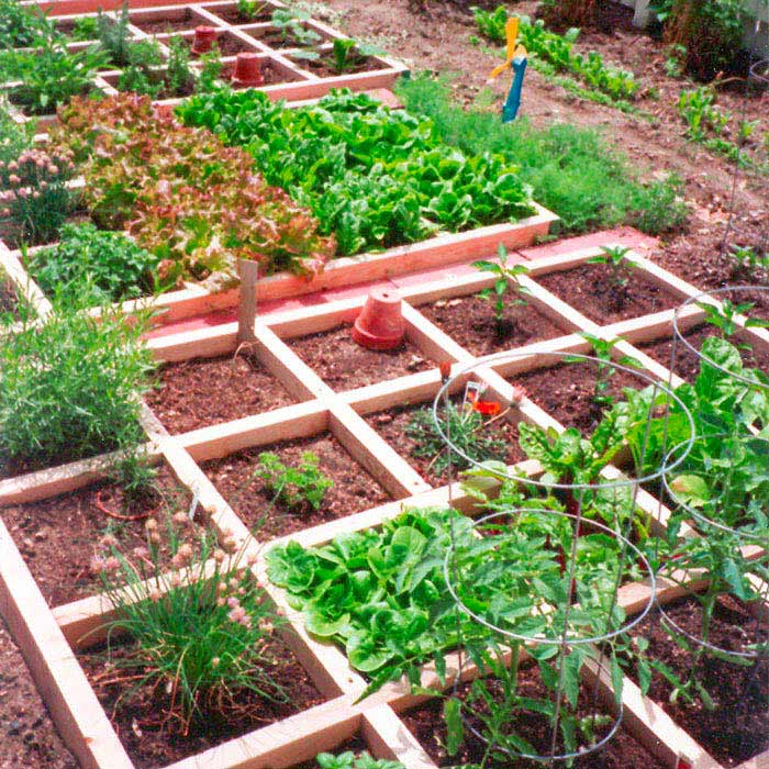 Small Vegetable Garden Ideas A Creative Mom